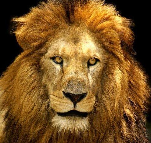 Höhle des Löwen Produkte